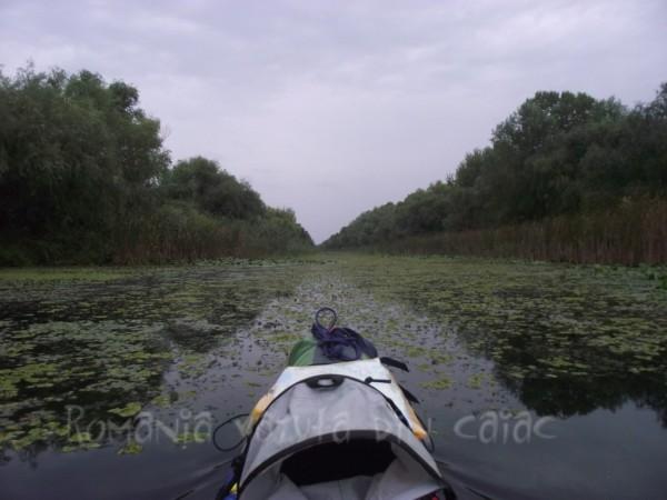 Caanl in Delta