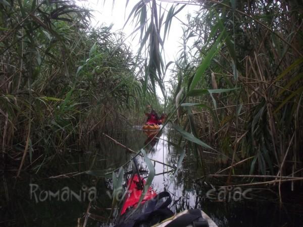 Caiac pe canal colmatat in Delta